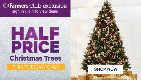 Half Price Christmas Trees