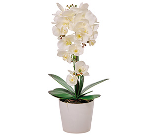 Tilly@home Artificial Plant, Orchid White in Ceramic Pot