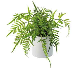 Tilly@home Artificial Plant, Fern in White Pot, Medium