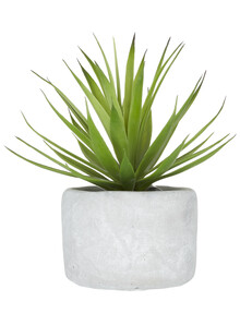 M&Co Grass In Pot, Small product photo