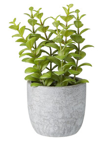 M&Co Apple Leaves in Cement Pot product photo