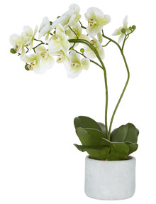 M&Co Orchid in Pot product photo