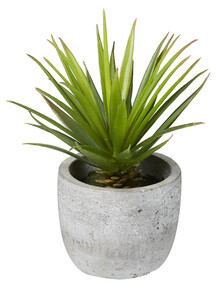 M&Co Sword Grass in Cement Pot, Large product photo